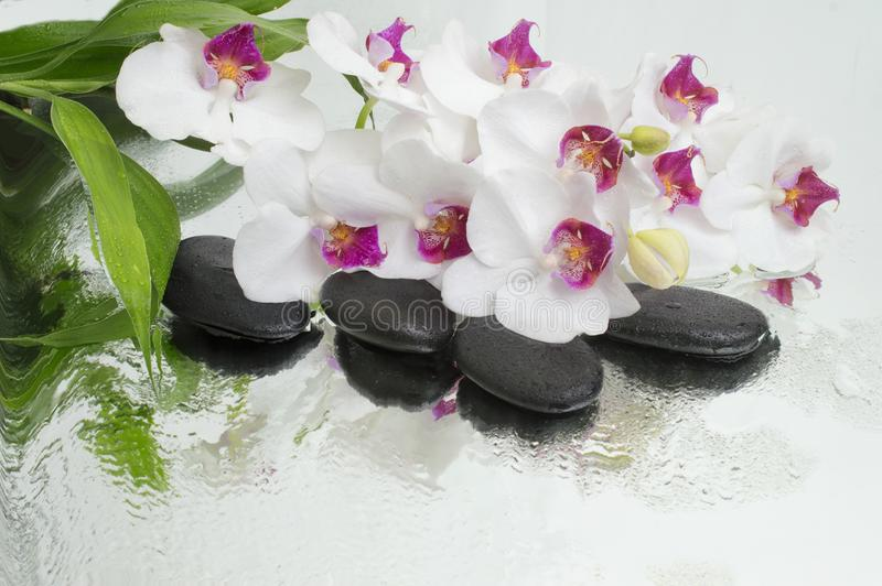 Spa Background - orchids black stones and bamboo on water royalty free stock images