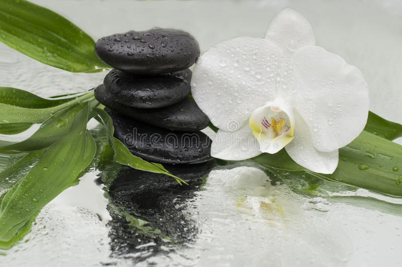 Spa Background - orchids black stones and bamboo on water. Spa Background - white orchids black stones and bamboo on water stock images