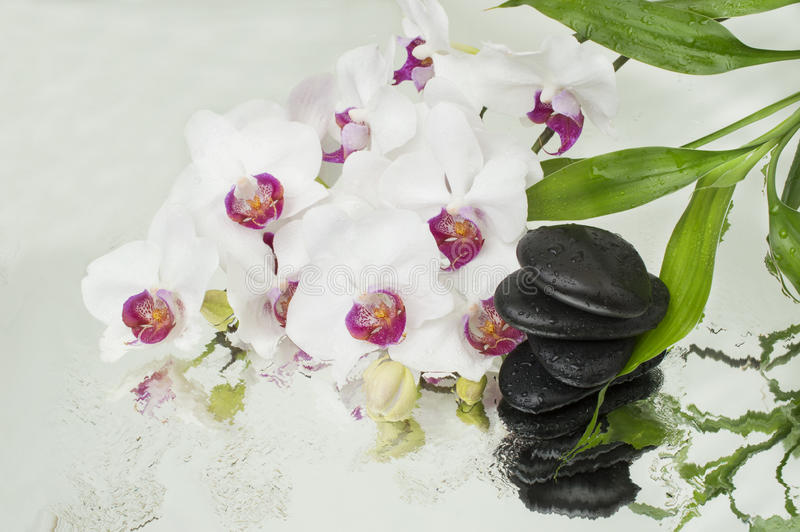 Spa Background - orchids black stones and bamboo on water stock image