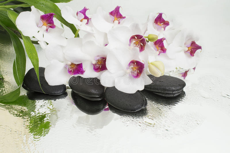 Spa Background - orchids black stones and bamboo on water royalty free stock photo