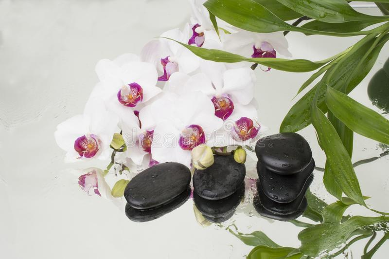 Spa Background - orchids black stones and bamboo on water royalty free stock photos