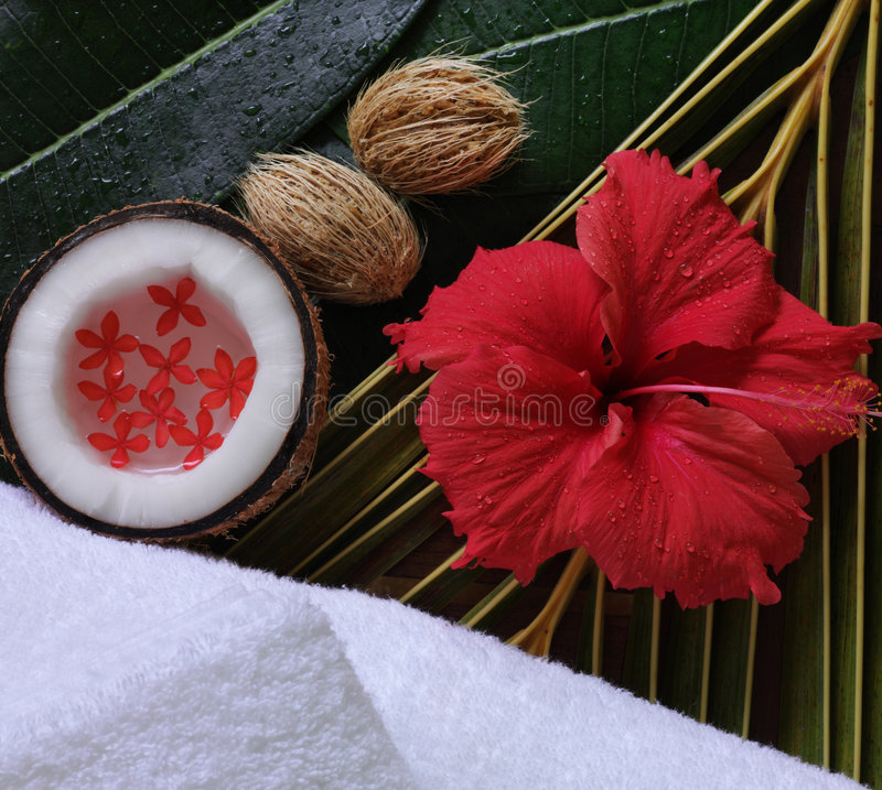 Download Spa beauty stock photo. Image of coconuts, beauty, background - 7466546