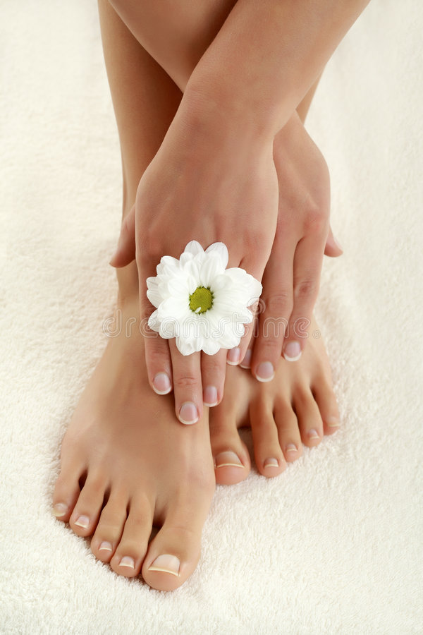 Download In spa center stock photo. Image of feet, chamomile, beauty - 6517040