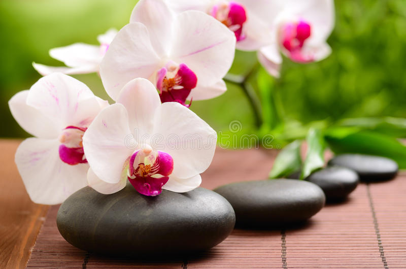 Spa concept. Zen basalt stones and bamboo on the wood royalty free stock images