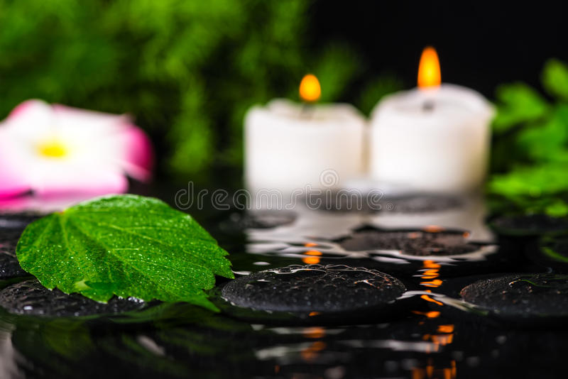 spa concept of green leaf hibiscus, plumeria with drops and candles on zen basalt stones in ripple reflection water, closeup royalty free stock photography