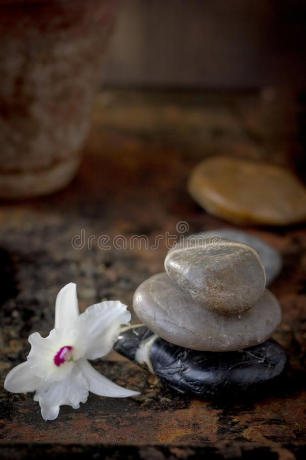 Spa concept - orchid flower with stones for spa therapy.  royalty free stock photo