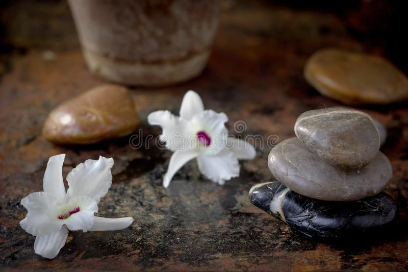 Spa concept - orchid flower with stones for spa therapy.  stock image