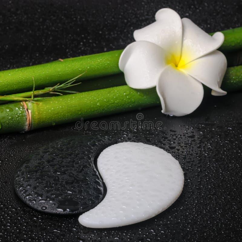 Spa concept of tropical frangipani flower, symbol Yin Yang and n royalty free stock photo