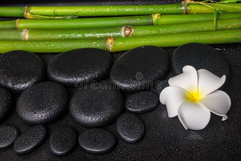 Spa concept of zen basalt stones, white flower plumeria stock photo