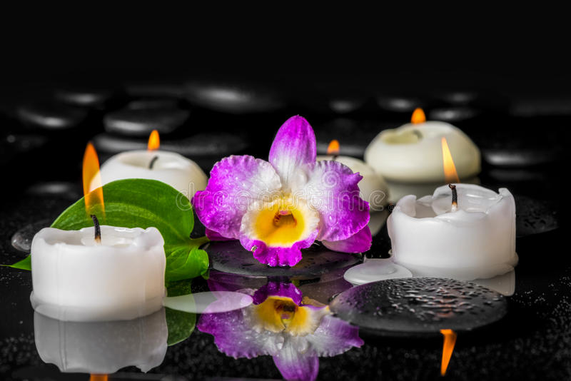 Spa design of purple orchid dendrobium, green leaf with dew. And candles on black zen stones in reflection water, close up stock photos