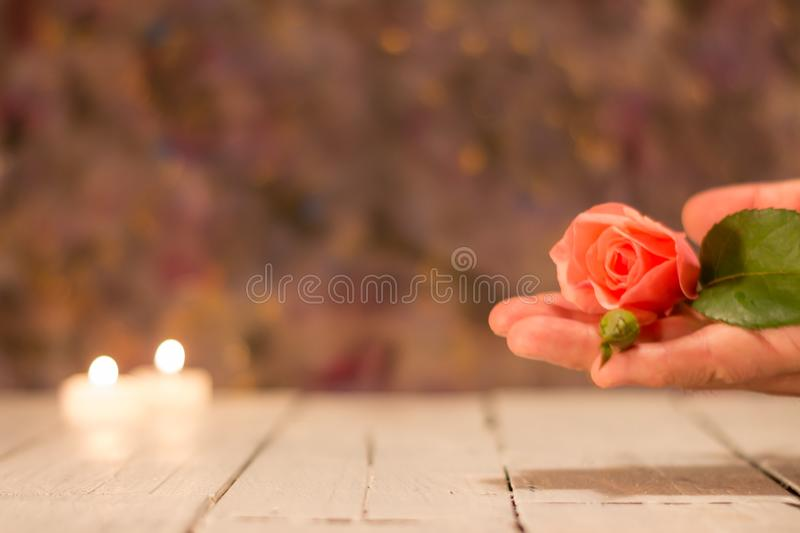 Spa elements. Hand holding a rose. Calm and relaxation royalty free stock photos