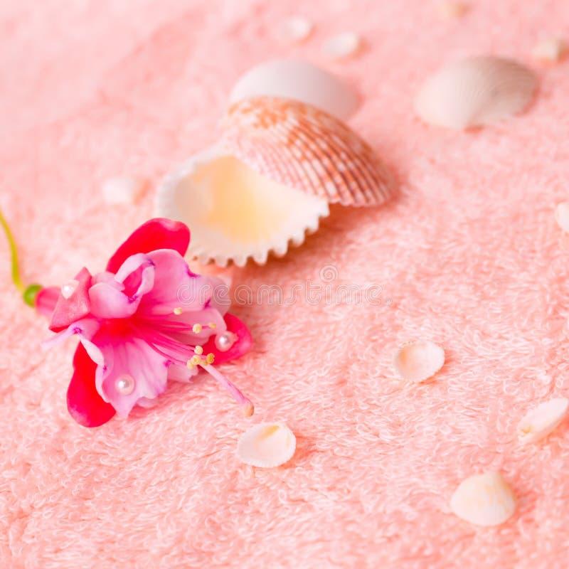 Spa erbjuder begrepp med rosa färgblommafuchsian, snäckskal på delica fotografering för bildbyråer