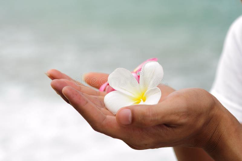 Download Spa flower hand ignore stock image. Image of ignore, flower - 21108313