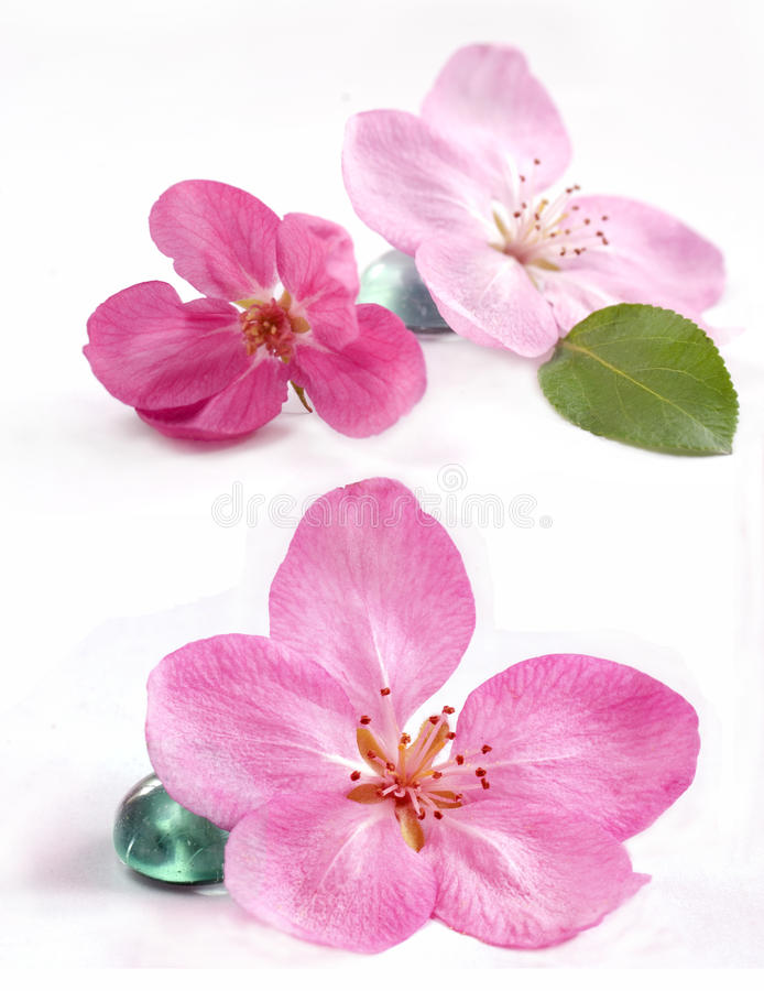 Spa flowers stock photo