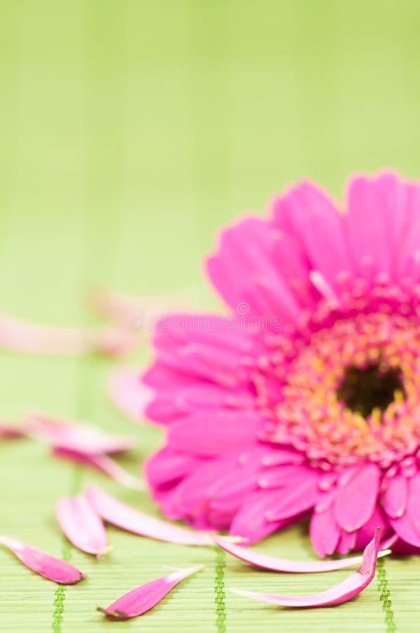 spa kwiatów zdjęcia stock