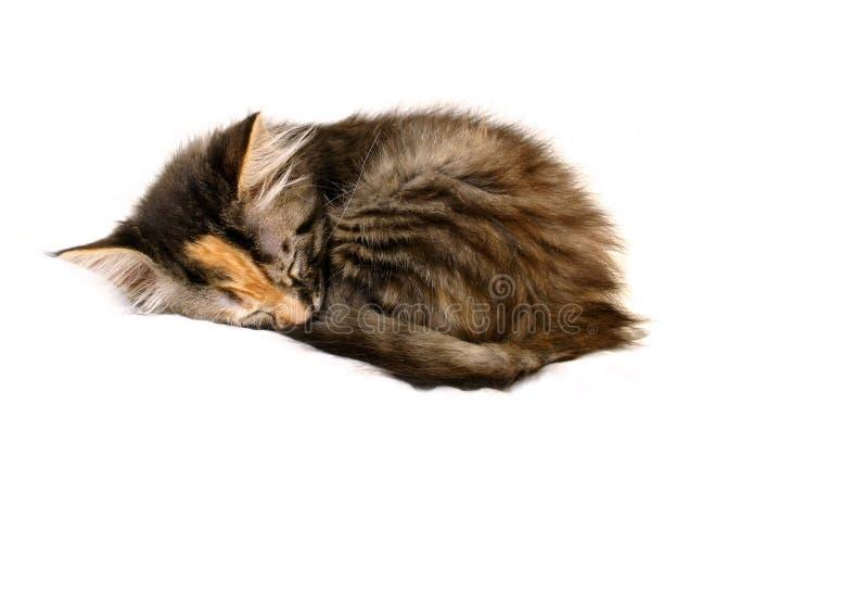 Download Spała na kotku obraz stock. Obraz złożonej z puss, odosobniony - 136991