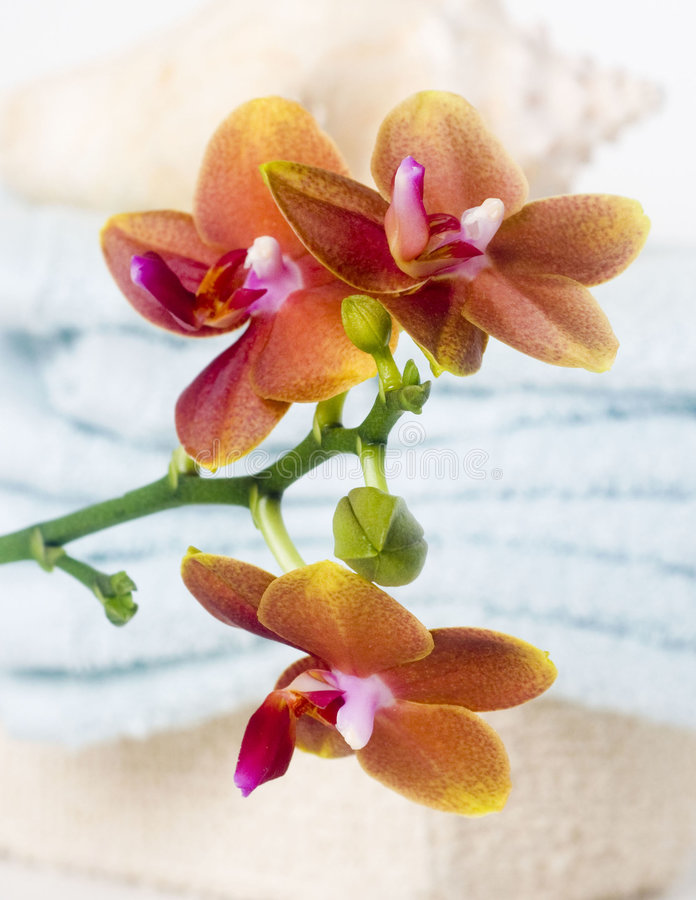 Download Spa Orchid bathroom scene stock photo. Image of orchid - 7159220
