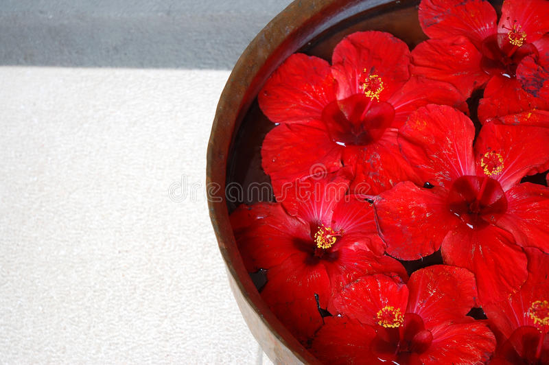 Spa Petals stock photography