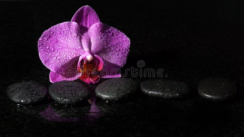 Spa stenar och orkidé på en mörk bakgrund med droppar av vatten, kopieringsutrymme för din text royaltyfri bild