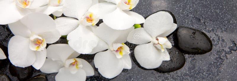 Spa stenar och vit orkidé royaltyfri foto