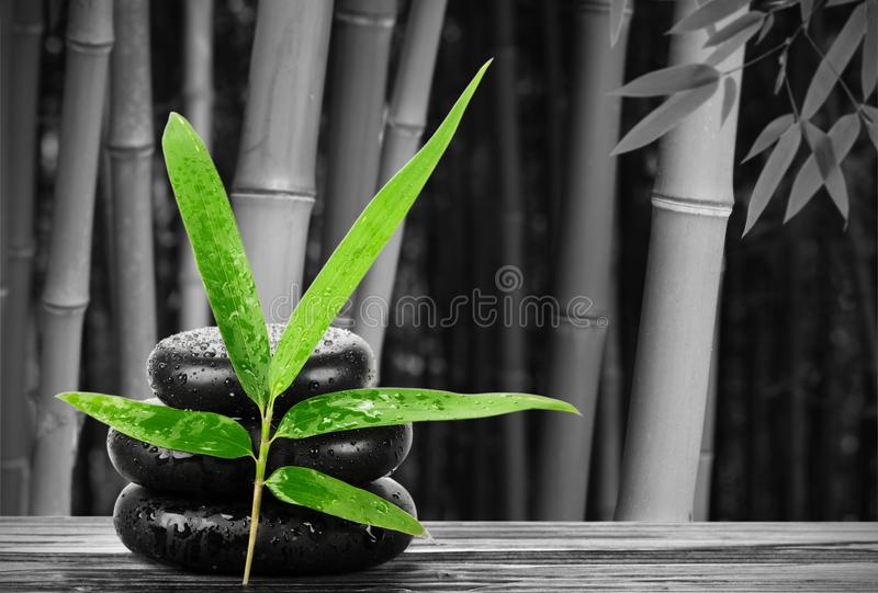 Spa still life with bamboo leaf and zen stone royalty free stock images