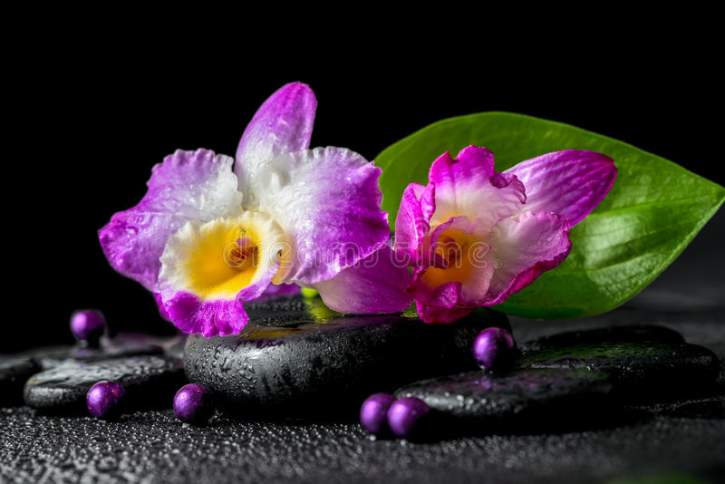 Spa still life of purple orchid dendrobium, green leaf Calla lily with dew and pearl beads on black zen stones, closeup stock photo
