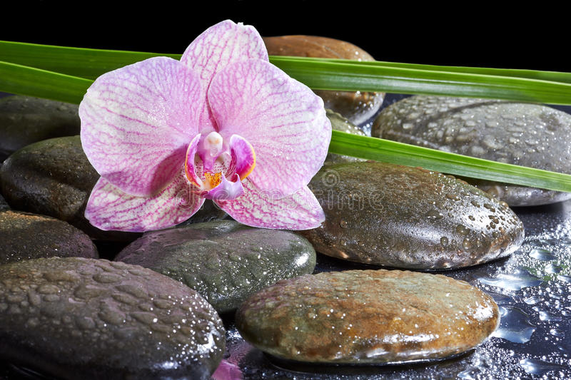 Spa still life with set of pink orchid and stones stock photography
