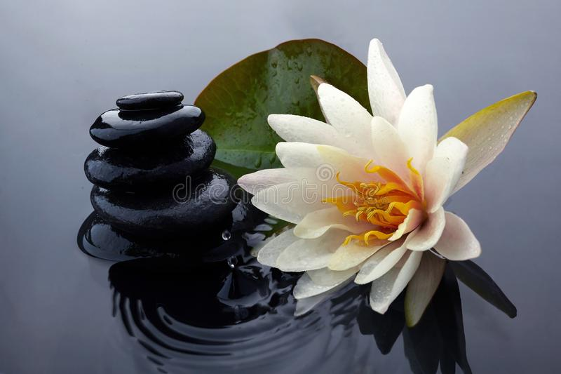 Spa still life with water lily and zen stone in a serenity pool royalty free stock photography