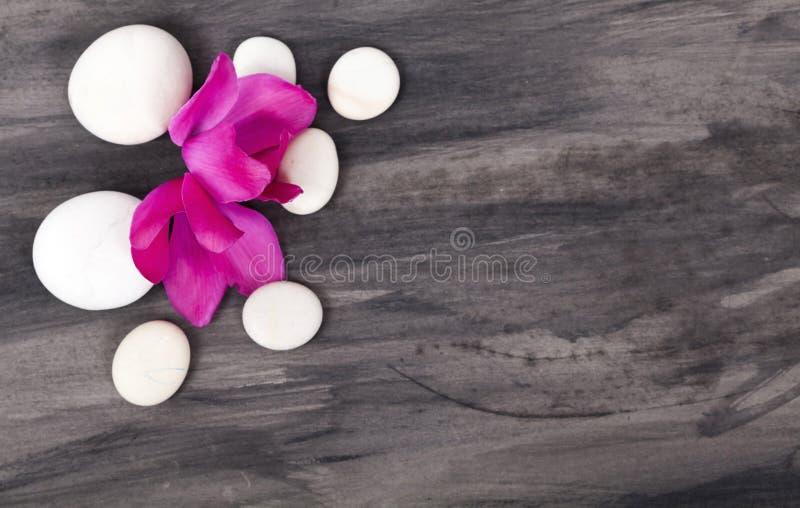 Spa stilleben med den rosa orkidén och vitzenstenen royaltyfri fotografi