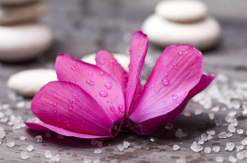 Spa stilleben med den rosa orkidén och vitzenstenen arkivfoton