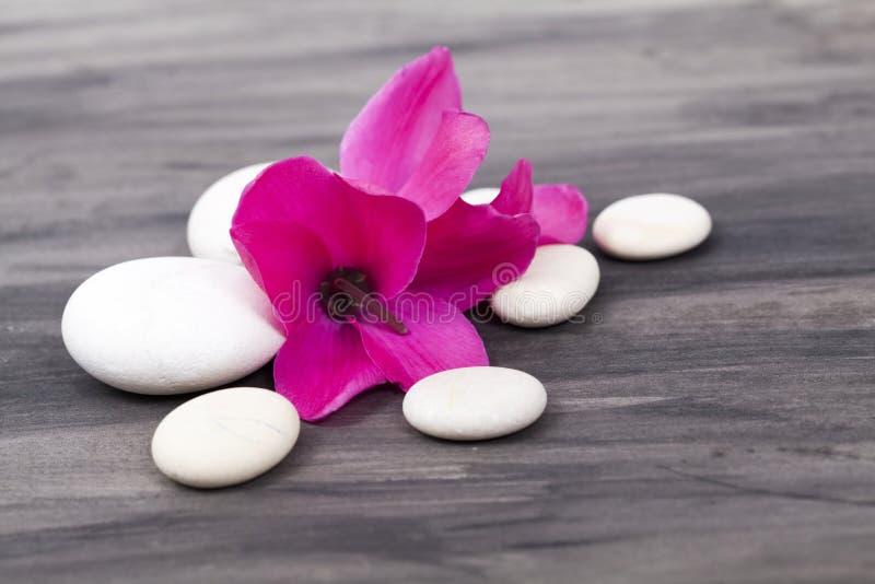 Spa stilleben med den rosa orkidén och vitzenstenen arkivbilder