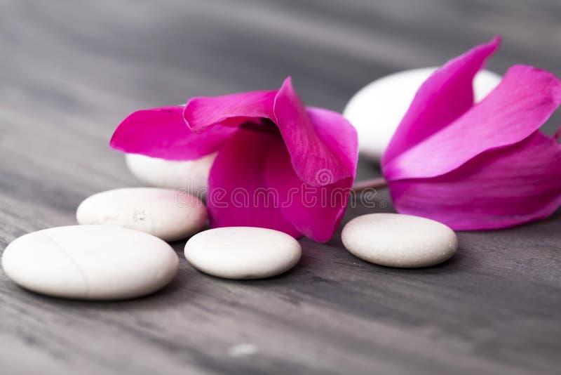 Spa stilleben med rosa färgblommor och den vita zenstenen arkivfoto