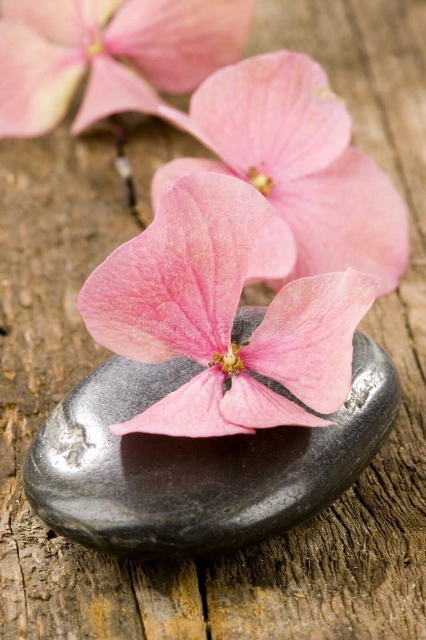 Download Spa stone stock photo. Image of lavender, decorative - 10278022