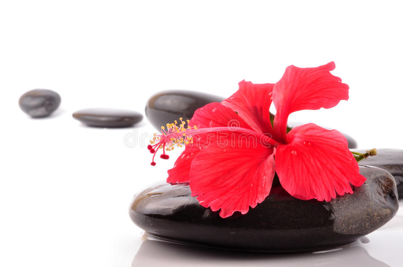 Spa stones. With hibiscus on white background