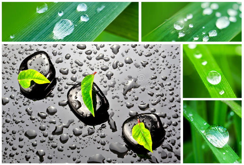 Download Spa Stones And Drops Od Dew Stock Image - Image of ecology, botanic: 21370027