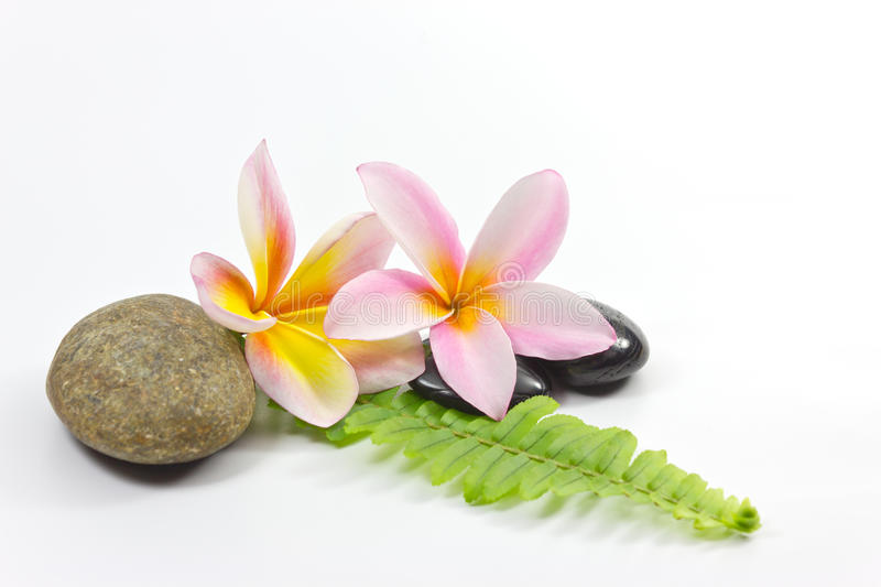 Download Spa stones and  flower stock image. Image of treatment - 22862525