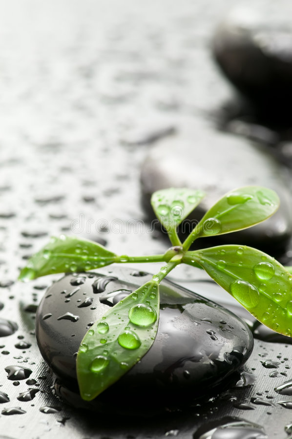 Spa stones and green leaf stock photos