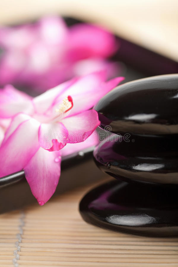 Spa Stones And Pink Flower Stock Image
