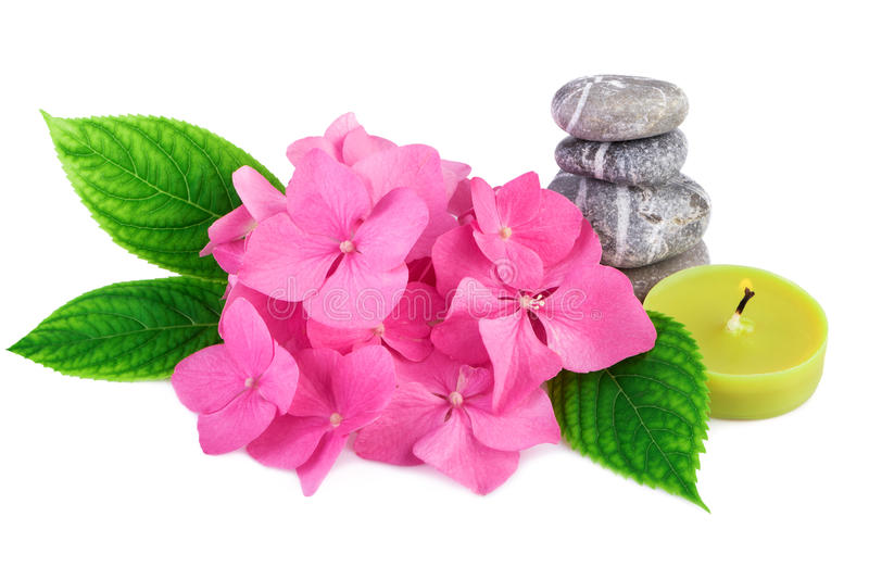 Spa stones zen with pink flowers and candle on white. Background royalty free stock images