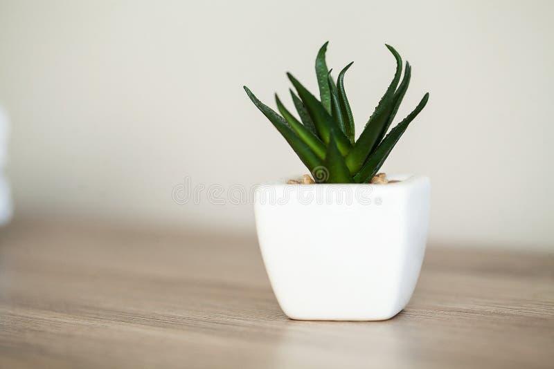 Spa. Succulent plant on window ledge in modern bathroom.  stock photos
