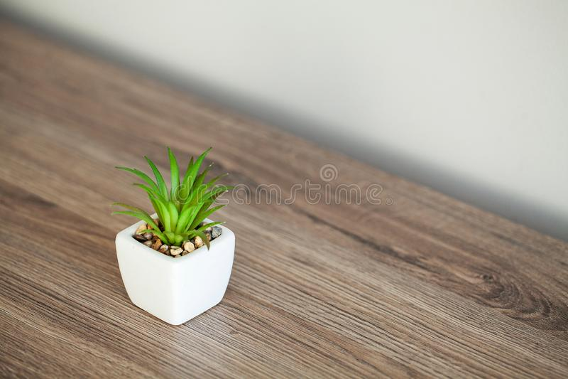 Spa. Succulent plant on window ledge in modern bathroom.  royalty free stock photos