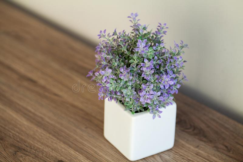 Spa. Succulent plant on window ledge in modern bathroom.  royalty free stock images
