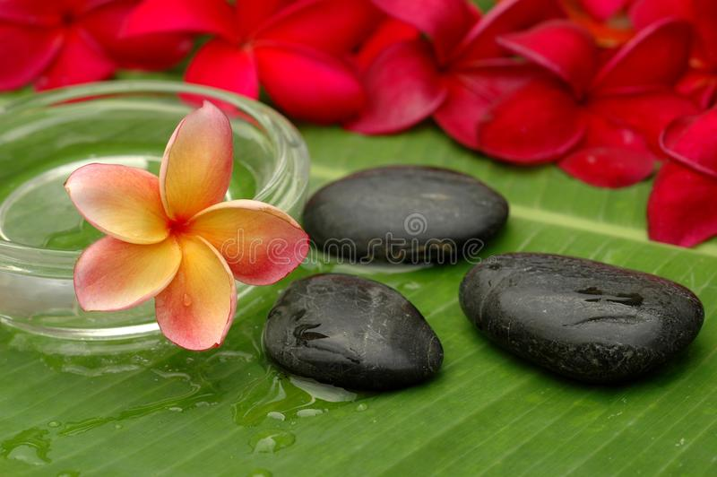 Spa and wellness royalty free stock photography