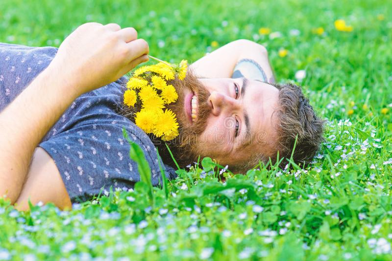 Spa and wellness concept. Bearded man with dandelion flowers lay on meadow, grass background. Man with beard on smiling. Face enjoy nature. Hipster with bouquet stock images