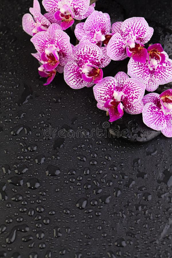 Spa, wellness and massage composition background border. Orchid flowers with black zen stones stock photos