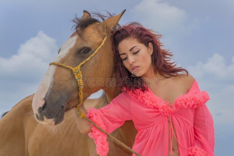 Spaans Donkerbruin Modeland horse stock foto's