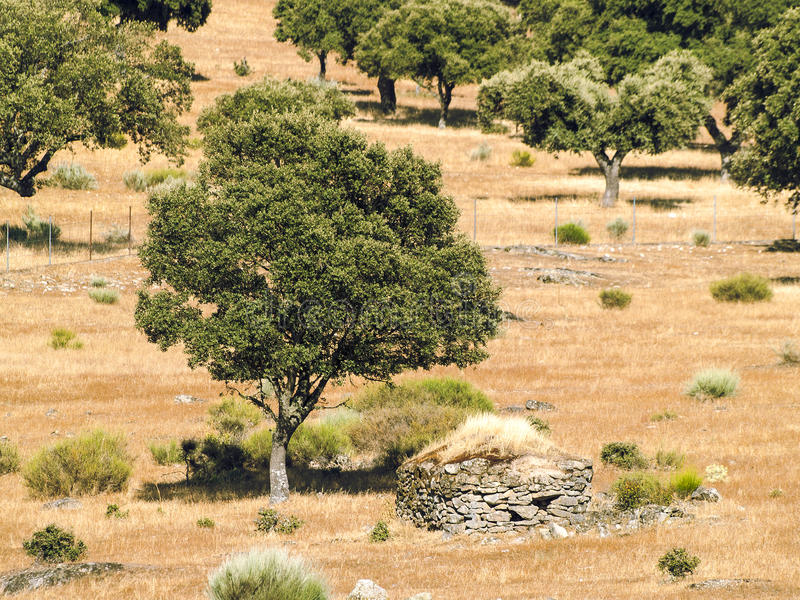 Spaans weiland op zomer stock foto's