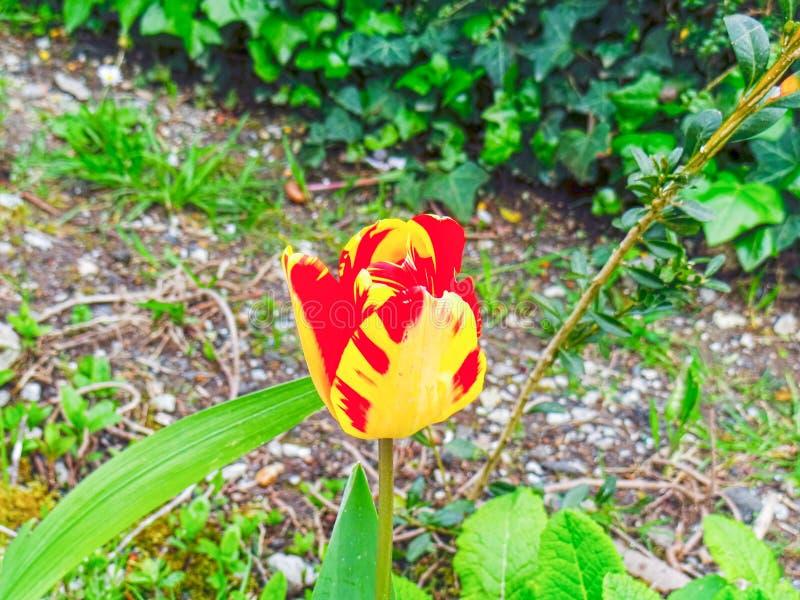 Spaanse bloem stock fotografie