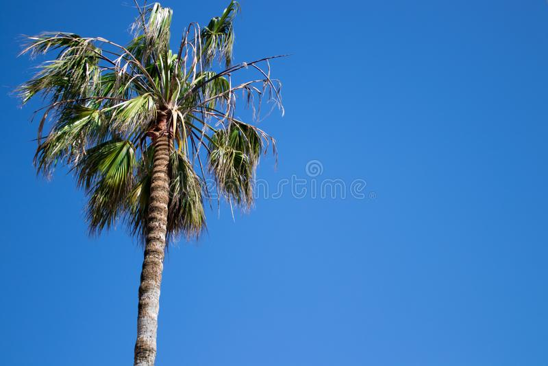 Spaanse palm royalty-vrije stock foto's