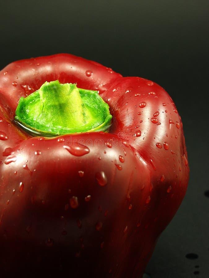 Spaanse peper royalty-vrije stock foto